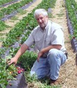Steve Esh of Georgia is pleased with his strawberry results