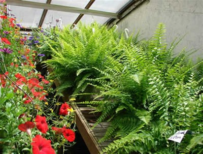 Greenhouse grower is customer for life